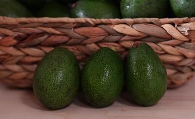 Dry Farmed Rincon Avocado LARGE - Monte Verde (1 ct)