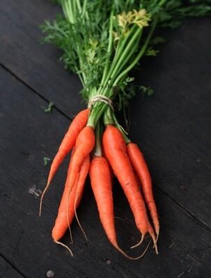 Carrots - Live Earth Farm (1 bunch)