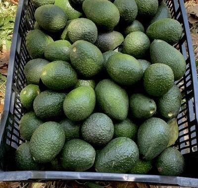 Dry Farmed Small/Medium Hass Avocado - Monte Verde (3 ct)