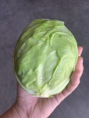 Green Cabbage - Groundswell Farm  (1 head)