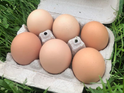 1/2 Dozen Duck Eggs - Corvus Farm