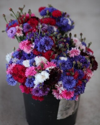 Edible Flowers - Sea to Sky (1 bouquet)
