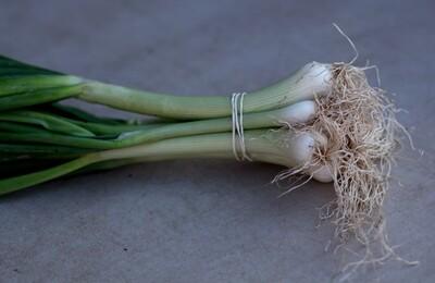 Green Onions - Sea to Sky Farm (1 bunch)