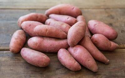 French Fingerling Potatoes - Mariquita Farm (1 lb)