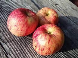 Gravenstein Apples SMALL- Sea to Sky Farm (1 lb)