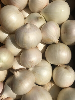 White Onions - Agricultural Land Conservancy (2 ct)