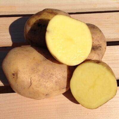 Butterball Potatoes - Sea to Sky Farm (1 lb)