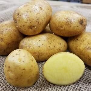 German Butterball Potatoes - Sea to Sky Farm (1 lb)