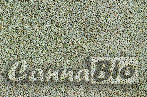 Sjemenke konoplje - hrana za životinje- rinfuza (kilogram)