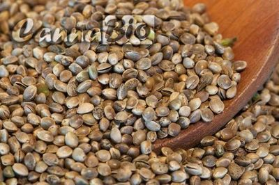 Sjemenke konoplje (cjelovite) - rinfuza (kilogram)
