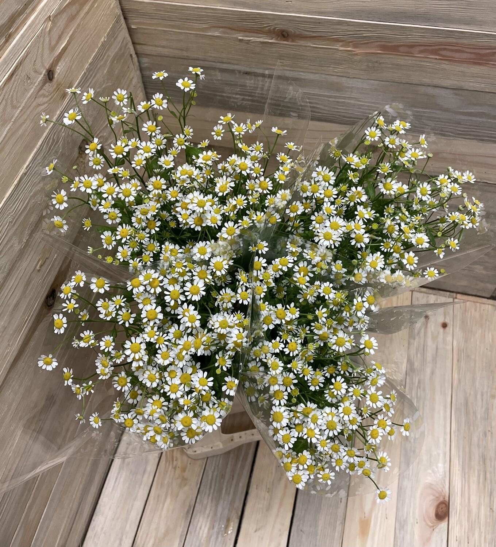 Bouquet de matricaria divers 7 pièces