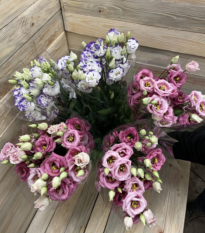 Bouquet d´eustoma (lisianthus) divers 5 pièces
