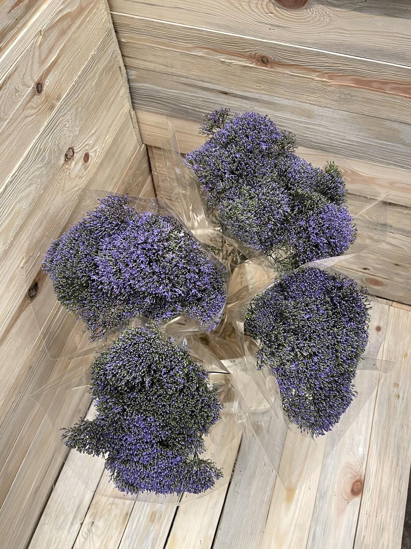 Bouquet de trachelium divers 7 pièces
