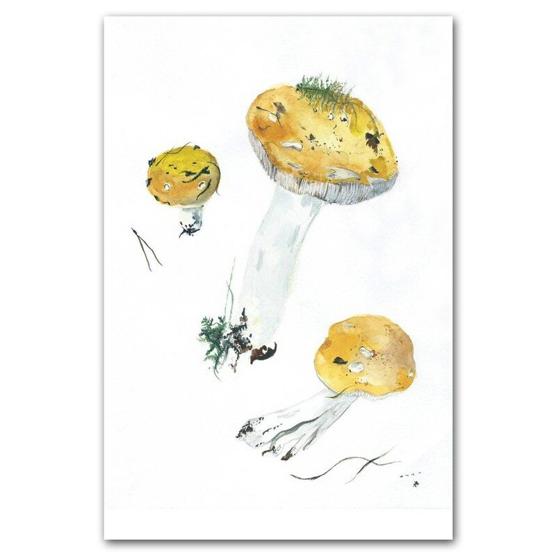 Жёлтые сыроежки