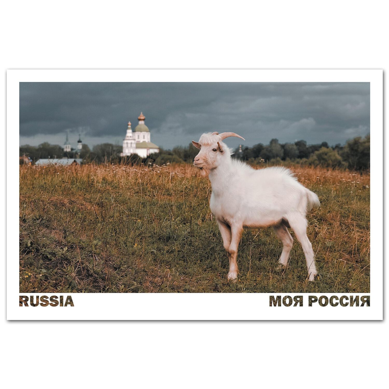 Задумчивая коза. Суздаль, Владимирская область