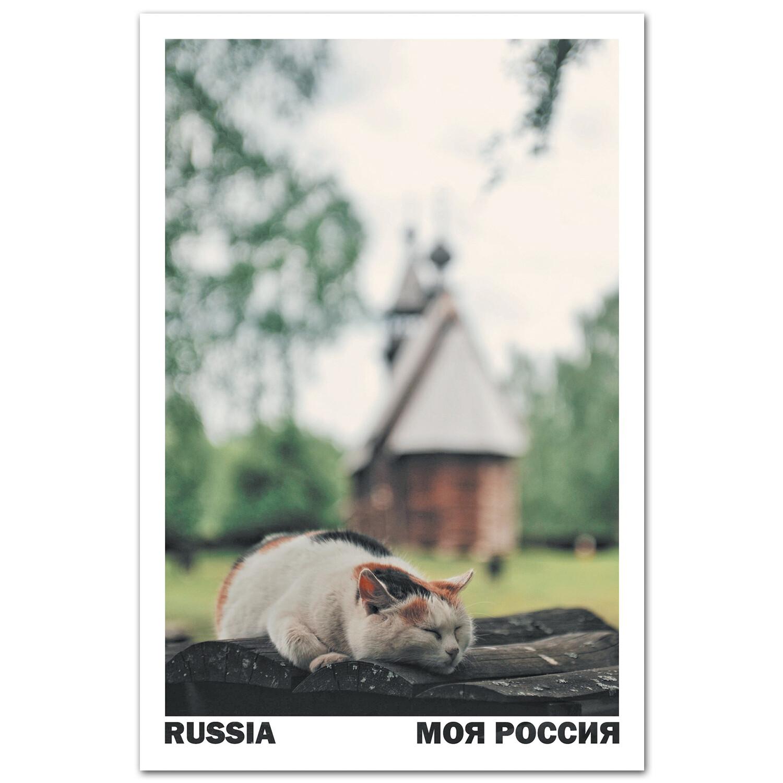 Музейный кот, Кострома