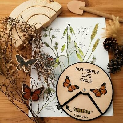Butterfly Life Cycle Wheel- 15 CM