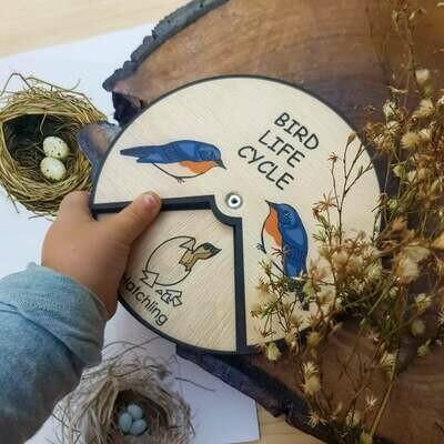 Bird Life Cycle Wheel- 15 CM