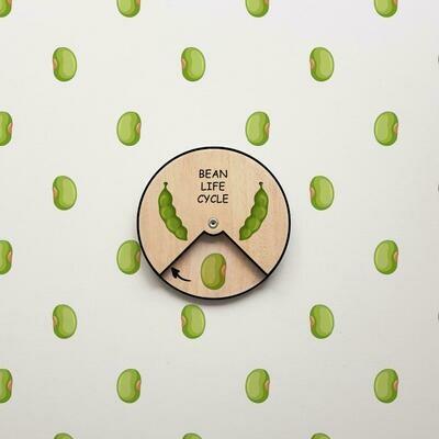 Bean Life Cycle- 12 CM