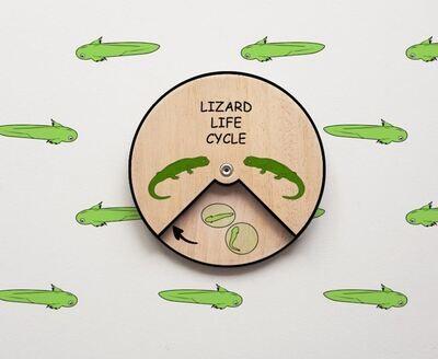 Lizard Life Cycle Wheel- 15 CM