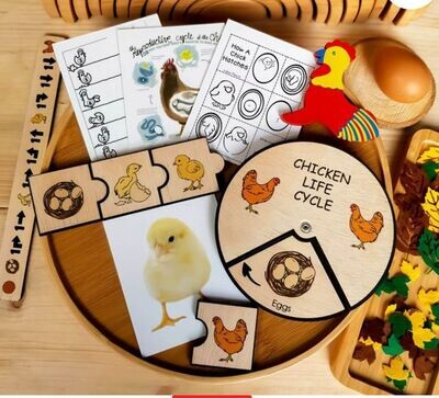 Chicken Life Cycle Wheel-15 CM