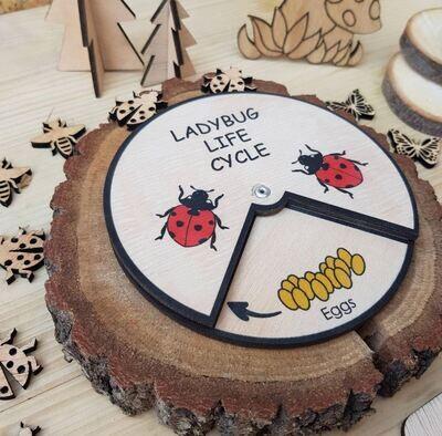 Ladybug Life Cycle Wheel-15 CM