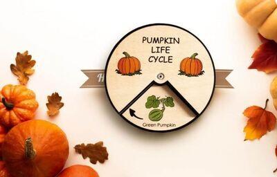 Pumpkin Life Cycle (15cm-Large)