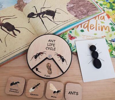 Ant Life Cycle Wheel-15 CM