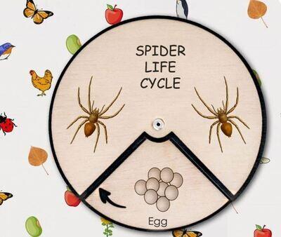 Spider Life Cycle Wheel- 15 CM