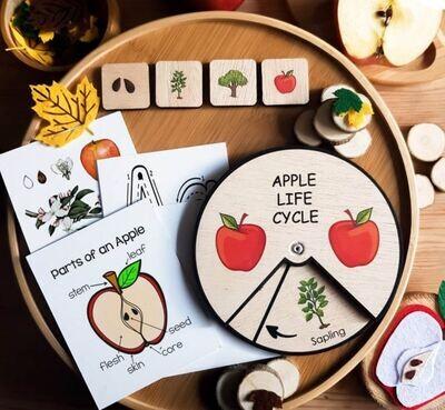 Apple Life Cycle Wheel-15 CM