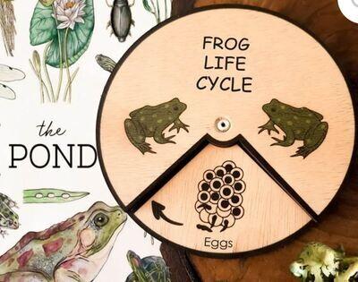 Frog Life Cycle Wheel-15 CM