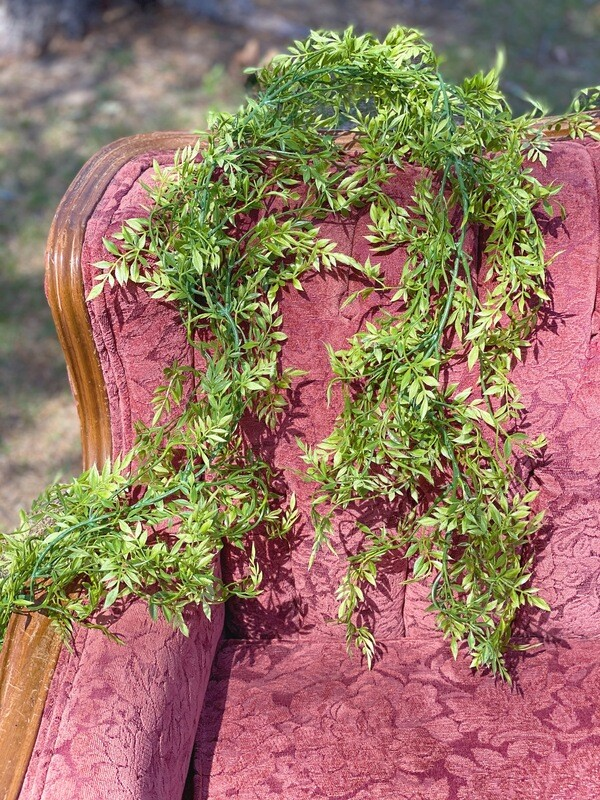Mini Ficus