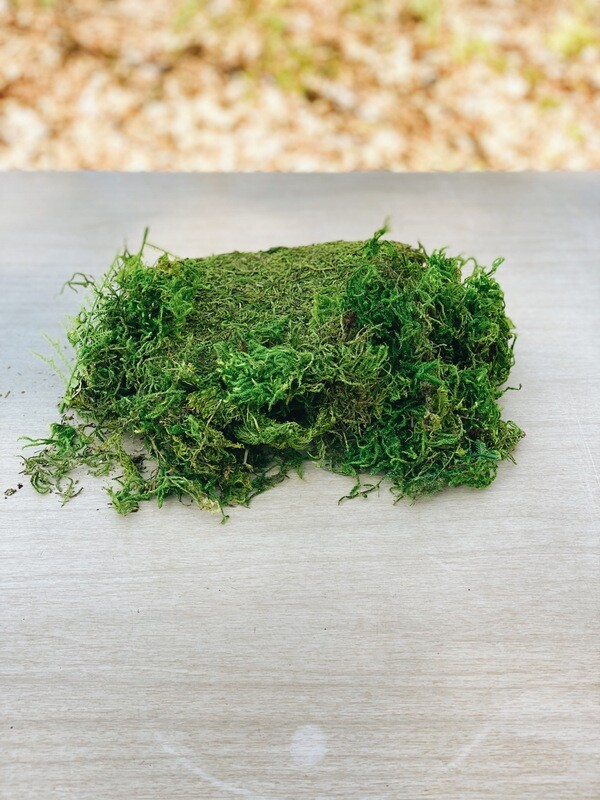 Moss Pieces