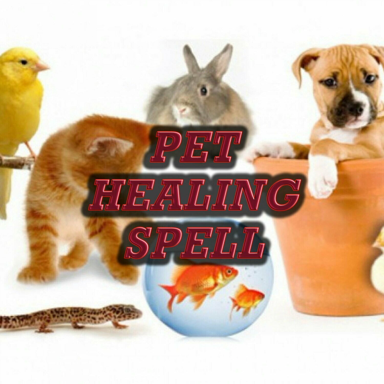 Pet Healing Spell