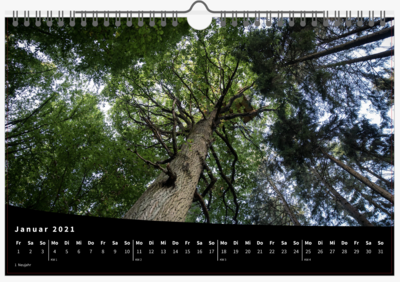 Dannenröder Forest photo calender [2021 or 2022]