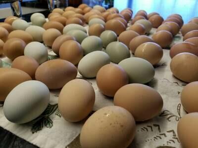 Farm Fresh Eggs 1 Dozen