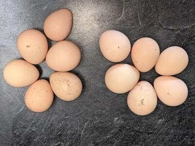 Mixed Breed Guinea Eggs