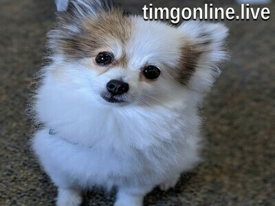 Rose The Dog desktop wallpaper (1024 x 768) by timgonline.live