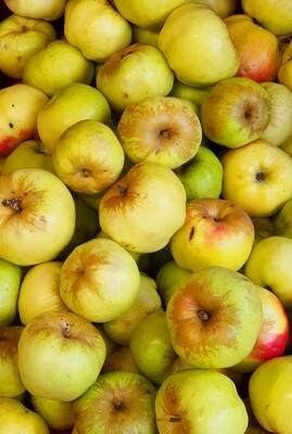 Āboli Bogatir Latvija 3 kg