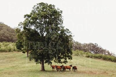 Herd Love