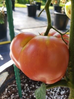 'Missouri Pink Love Apple'