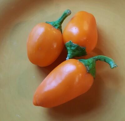 'Lunchbox Orange'