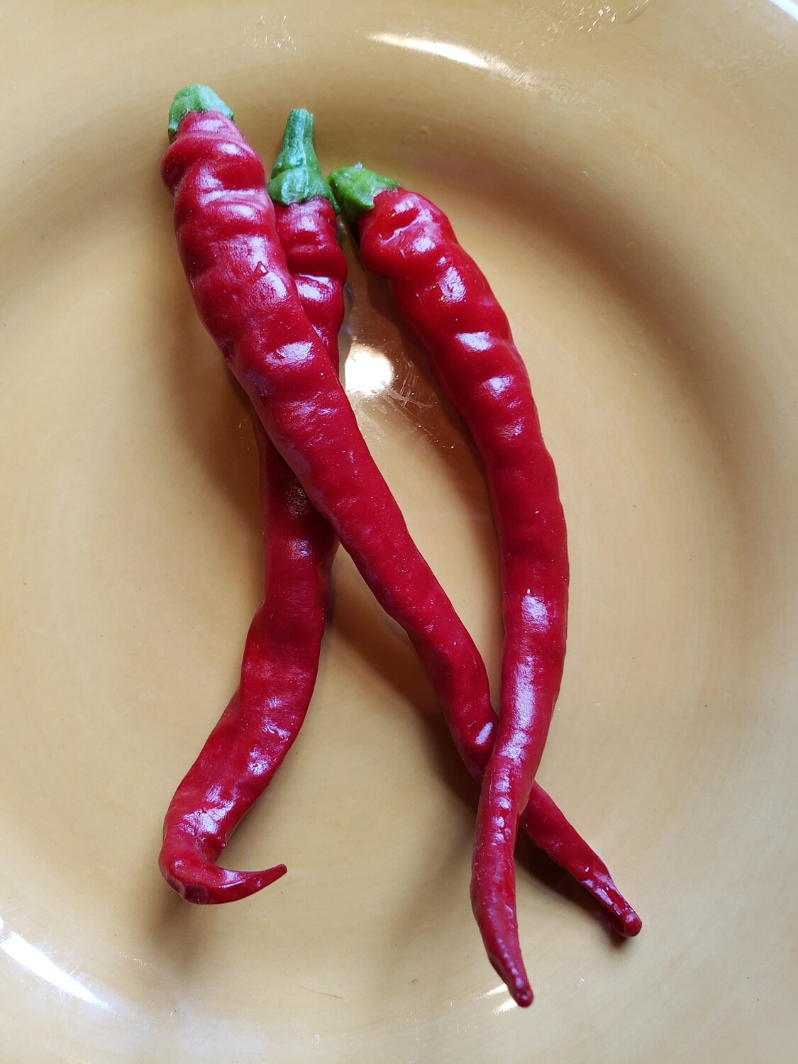 'Cayenne Long Thin'