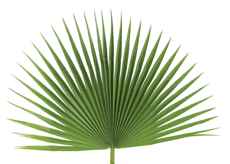 Palm Fans - Bag of 4