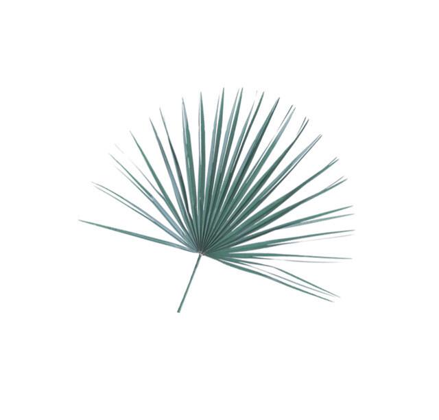 Mediterranean Palm Fans - Bag of 8