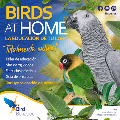 Birds at home - La educación de tu loro