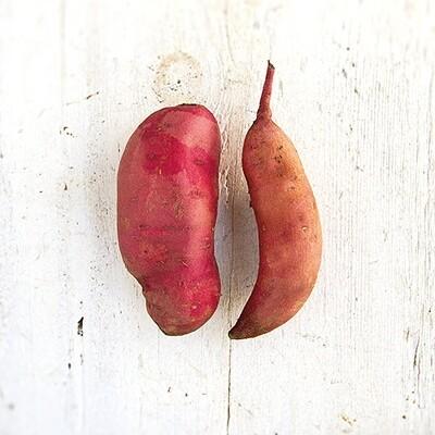 Balsam Sweet Potatoes lb