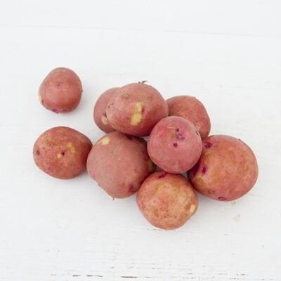 Balsam Red Gold Potatoes lb