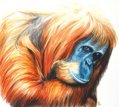 Old Orang (giclee print- open edition)
