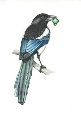 The Curious Magpie